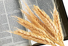 bible-wheat